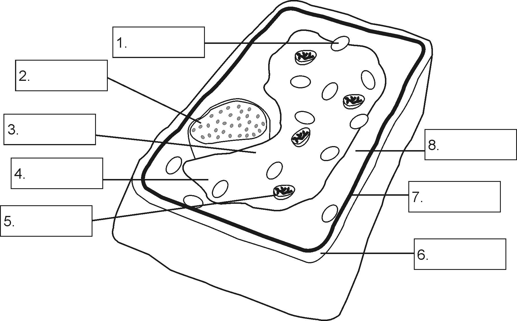 Structure Of A Plant Cell By Openstax Detailed Diagram