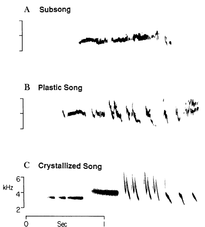 three figures showing the representation of different developmental stages of song overtime.