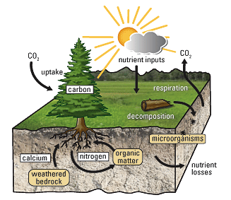 Summary of soil pollution