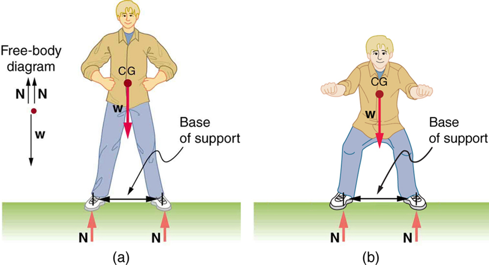 Part a of the figure shows a man standing on the ground. The feet are a shoulder-width apart from each other. The weight W of the man is acting at the center of gravity of the body of the man. Two normal reactions N each are shown acting on the feet of the man. The distance between the feet of the man is marked as the base of support. A free body diagram is also shown on the left side of the figure.  Part b of the figure shows a man standing upright with his knees bent. The feet are a distance apart from each other. The weight W of the man is acting at the center of gravity of the body of the man. Two normal reactions N each are shown acting on the feet of the man. The distance between the feet of the man is marked as the base of support.