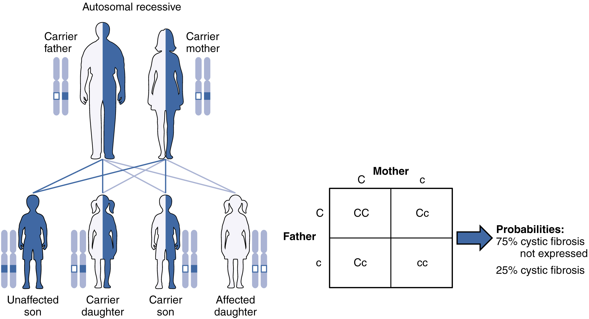 is sickle cell anemia sex linked dominant or recessive in Victoria
