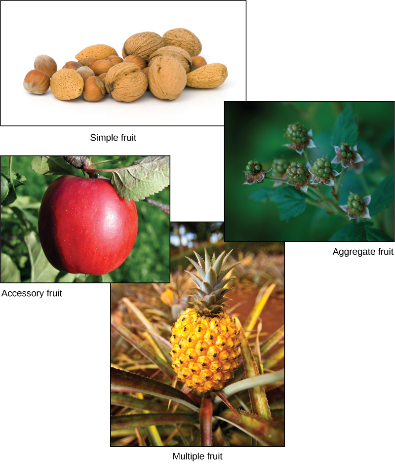 Simple fruit examples