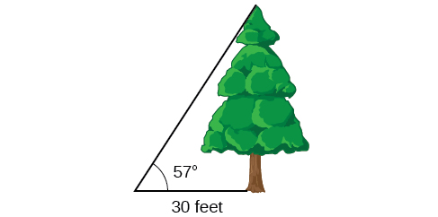 A tree with angle of 57 degrees from vantage point. Vantage point is 30 feet from tree.