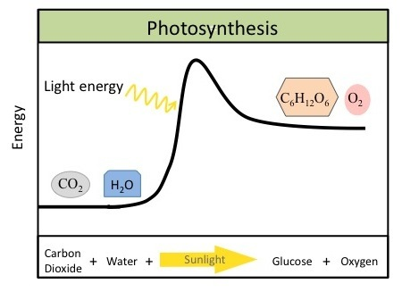 research oxygen and carbon dioxide essay