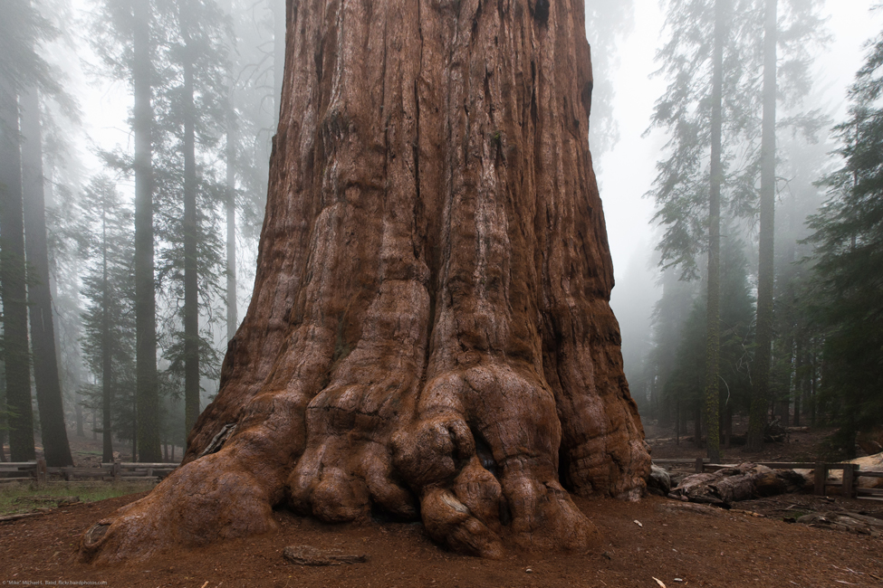 A picture of the bottom of the world's largest living tree.