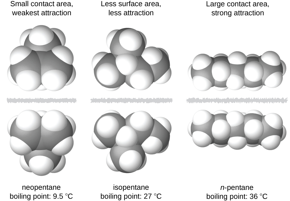 "Three images of molecules are shown. The first shows a cluster of large, gray spheres each bonded together and to several smaller, white spheres. There is a gray, jagged line and then the mirror image of the first cluster of spheres is shown. Above these two clusters is the label, ""Small contact area, weakest attraction,"" and below is the label, ""neopentane boiling point: 9.5 degrees C."" The second shows a chain of three gray spheres bonded by the middle sphere to a fourth gray sphere. Each gray sphere is bonded to several smaller, white spheres. There is a jagged, gray line and then the mirror image of the first chain appears. Above these two chains is the label, ""Less surface area, less attraction,"" and below is the label, ""isopentane boiling point: 27 degrees C."" The third image shows a chain of five gray spheres bonded together and to several smaller, white spheres. There is a jagged gray line and then the mirror image of the first chain appears. Above these chains is the label, ""Large contact area, strong attraction,"" and below is the label, ""n-pentane boiling point 36 degrees C."""