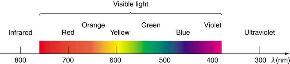 The visible strip of the electromagnetic spectrum is highlighted and shown in the picture. The wave length range is from eight hundred nanometers on the left to three hundred nanometers on the right. The divisions between infrared, visible, and ultraviolet are not perfectly distinct. The colors in the visible strip are also not perfectly distinct; they are marked as bands labeled from red on the left to violet on the right.