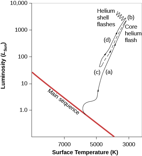 "Evolution of a Star like the Sun on an H–R Diagram. In this plot the vertical axis is labeled ""Luminosity (LSun),"" and goes from 1.0 near the bottom to 10,000 near the top. The horizontal axis is labeled ""Surface Temperature (K),"" and goes from 9000 on the left to 3000 on the right. The main sequence is drawn as a diagonal red line beginning at L ~ 40 on the left down to T ~ 4000 at the bottom. The evolutionary path of the star is drawn as a black line. Beginning at L = 1 and T = 5500, the line moves upward away from the main sequence. This portion of the line is labeled ""(a),"" and is described in the caption. The line continues upward to L ~ 1000 and T ~ 3000 to point ""(b),"" labeled ""Core helium flash."" From point b, the line (now dashed) moves downward to L ~ 100 and T ~ 5000 and labeled ""(c),"" and is described in the caption. From c, the line moves upward again. This portion of the line is labeled ""(d),"" and is described in the caption. The line culminates in a series of waves near L = 5000 and T ~ 3500 and is labeled ""Helium shell flashes."""