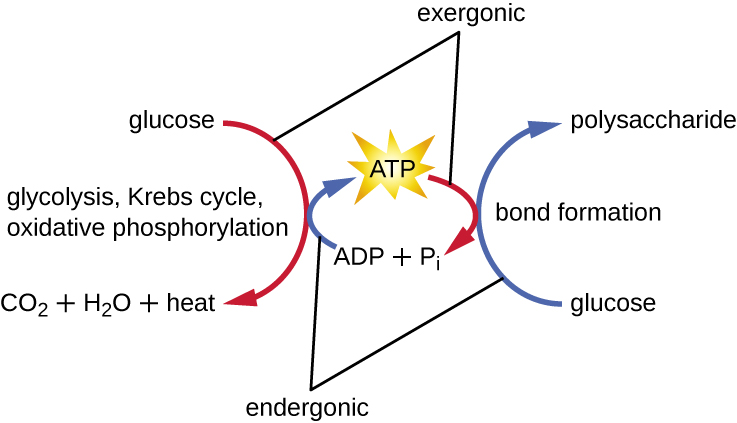 enzyme structure and function by openstax  page 3  10