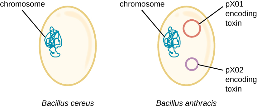 serratia marcescens bacillus cereus report essay
