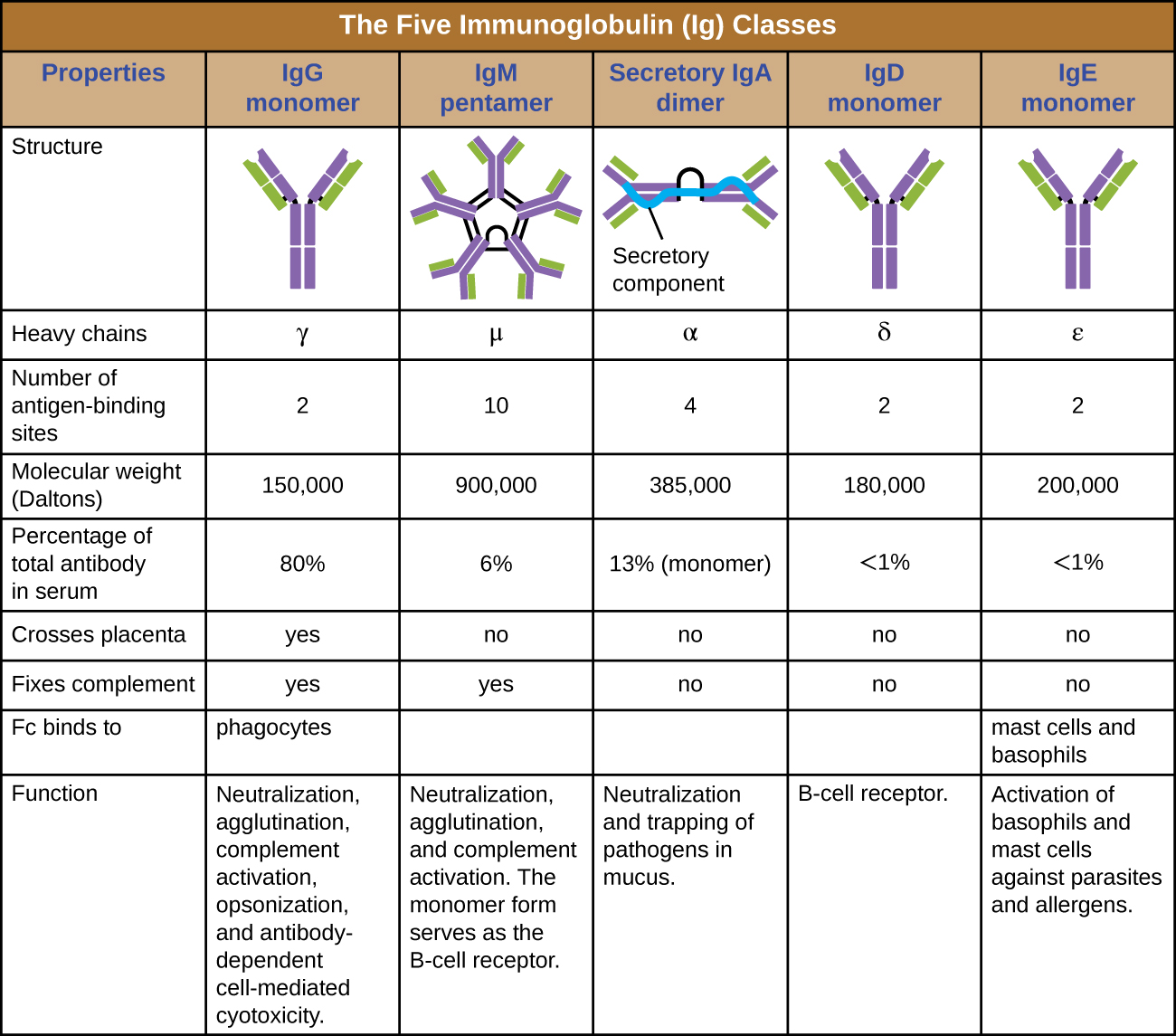 Fill In The Blank, Overview Of Specific Adaptive Immunity