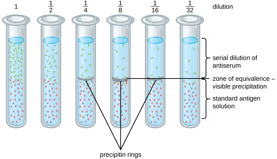 Precipitin Ring Test Detecting Antigen Antibody Complexes By