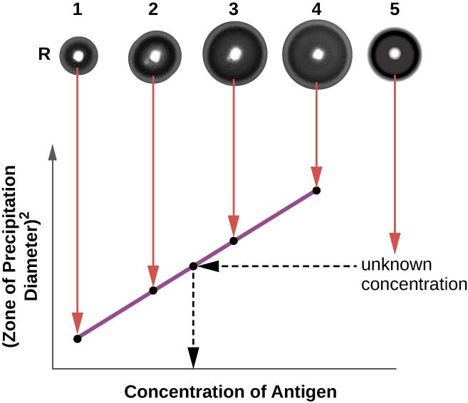 Detecting Antigen Antibody Complexes: Fill In The Blank, Detecting Antigen-antibody Complexes