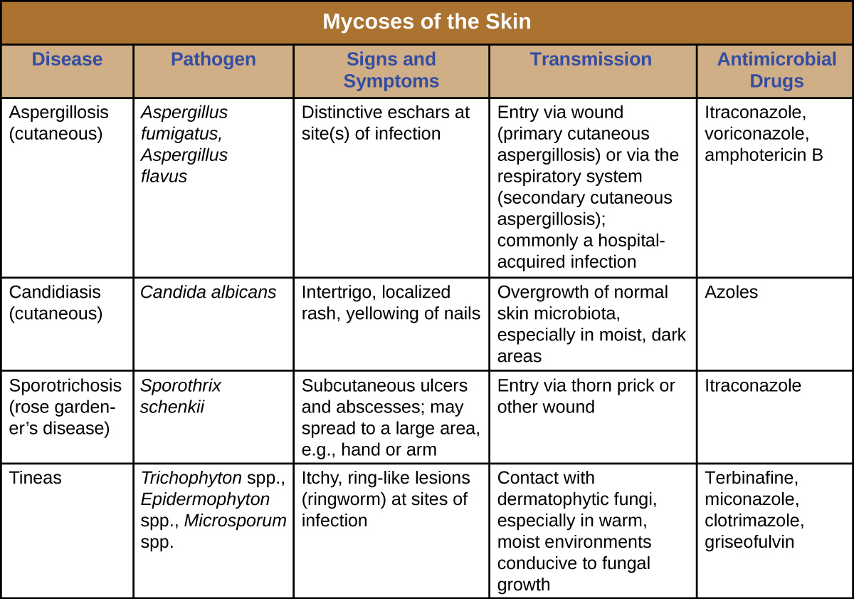 a summary of the skin i m Reflective summary on prescribing practice  the portfolio will conclude with a reflective summary on prescribing practice learning  • skin infections and.