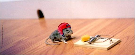 A mouse with a helmet contemplates a piece of cheese on a trap.