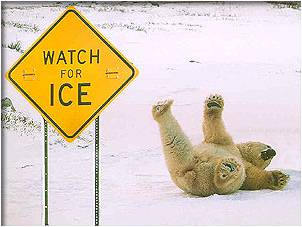 A polar bear sliding on his back next to a 'watch for ice' sign.