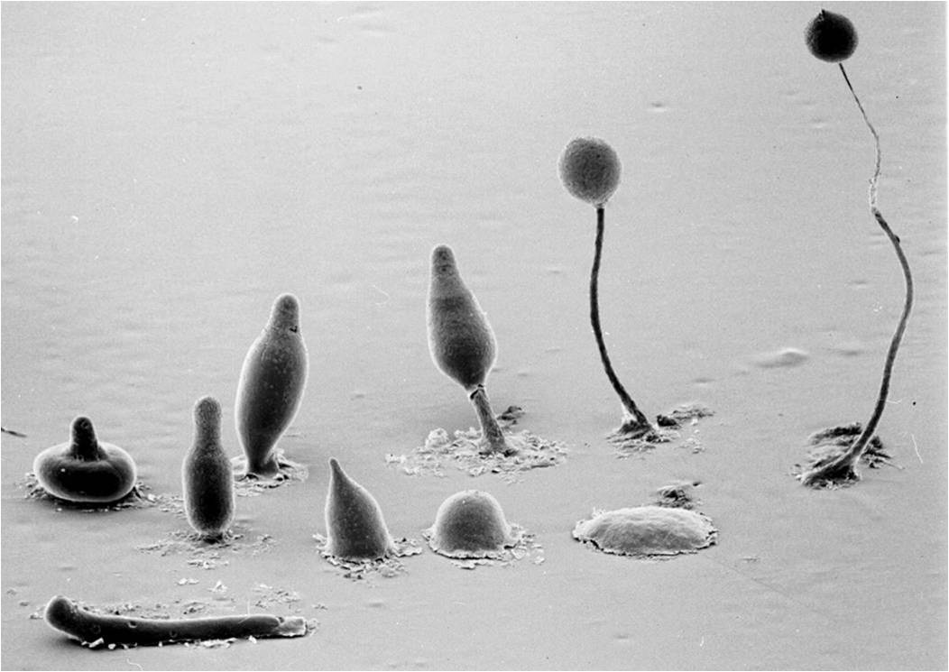 A picture taken with a scanning electron microscope.