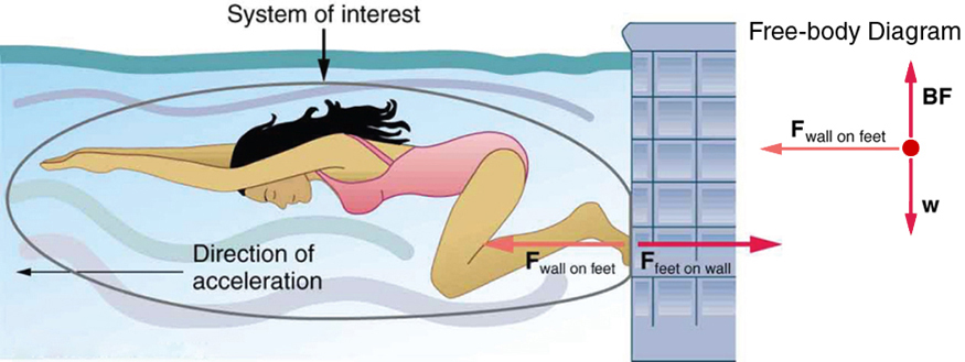A swimmer is exerting a force with her feet on a wall inside a swimming pool represented by an arrow labeled as vector F sub Feet on wall, pointing toward the right, and the wall is also exerting an equal force on her feet, represented by an arrow labeled as vector F sub Wall on feet, having the same length but pointing toward the left. The direction of acceleration of the swimmer is toward the left, shown by an arrow toward the left.