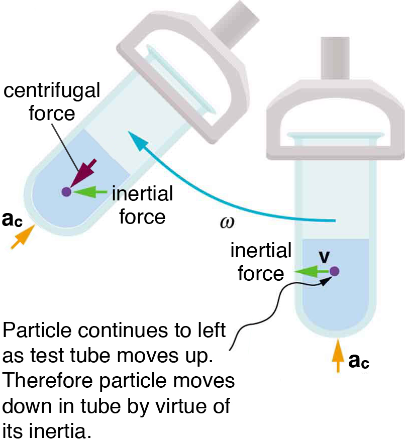 A test tube is fitted in a centrifuge. The centrifuge is rotating toward the left. The inertial force vector on a particle inside the liquid is directed toward the left. The  centrifugal force is directed toward the bottom of the test tube. The angular velocity is marked as omega.