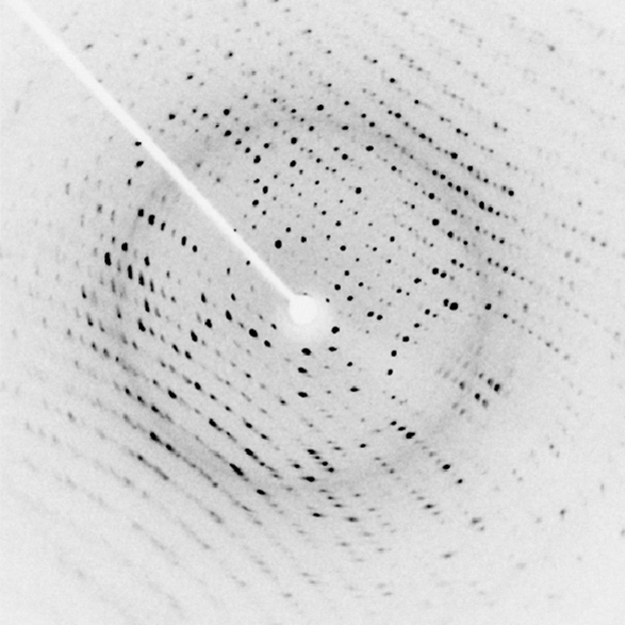 An x ray diffraction image, which resembles a structured array of small black dots on a white background. A white arm extends from the top left to the center of the image, where there is a small white disk. This white disk is the shadow of the beam block, which blocks the part of the incident x ray beam that was not diffracted by the crystal.