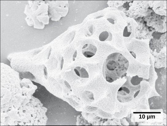 The micrograph shows a tear drop-shaped white structure reminiscent of a shell. The structure is hollow and perfused with circular holes.