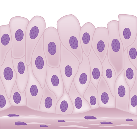 Illustration shows tall, diamond-shaped cells layered one on top of the other.
