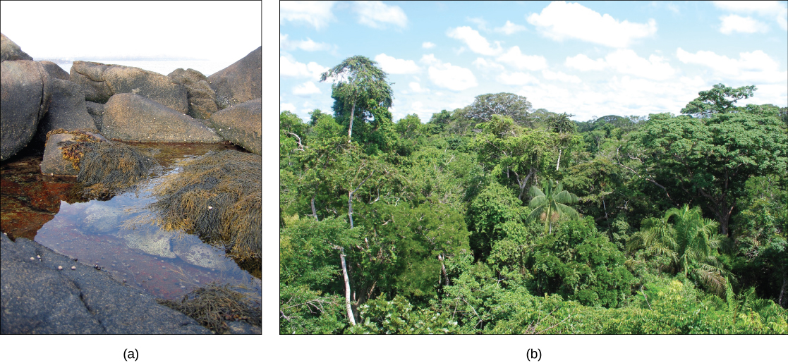Left photo shows a rocky tide pool with seaweed and snails. Right photo shows the Amazon Rainforest.