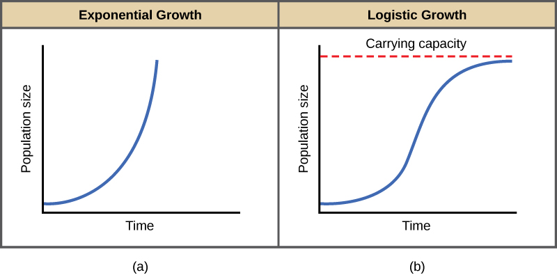Both (a) and (b) graphs plot population size versus time. In graph (a), exponential growth results in a curve that gets increasingly steep, resulting in a J-shape. In graph (b), logistic growth results in a curve that gets increasingly steep, then levels off when the carrying capacity is reached, resulting in an S-shape.