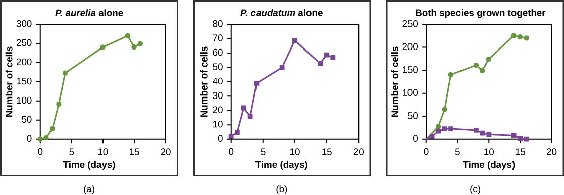 The three graphs all plot number of cells versus time in days. In Graph (a), P. aurelia is grown alone. In graph (b), P. caudatum is grown alone. In graph (c), the two species are grown together. When grown together, the two species both exhibit logistic growth and grow to a relatively high cell density. When the two species are grown together, P. aurelia shows logistic growth to nearly the same cell density as it exhibited when grown alone, but P. caudatum hardly grows at all, and eventually its population drops to zero.