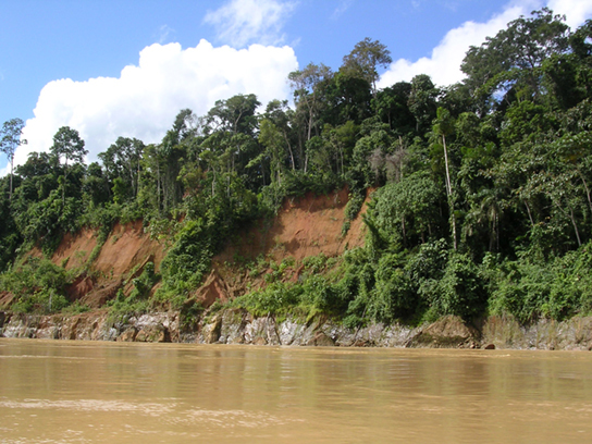 Photo depicts a section of the Amazon River, which is brown with mud. Trees line the edge of the river.