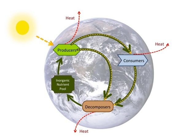 Energy flows, nutrient cycle