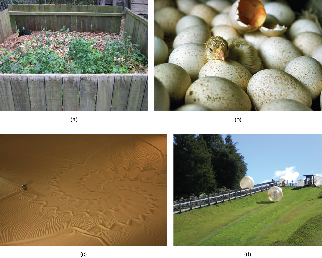 Four photos show (a) a compost pile, (b) a baby chick emerging from a fertilized egg, (c) sand art, and (d) a ball rolling downhill.