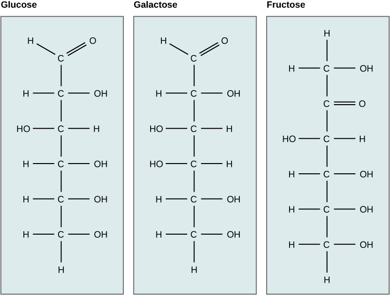 Chemical structures of glucose, galactose, and fructose.