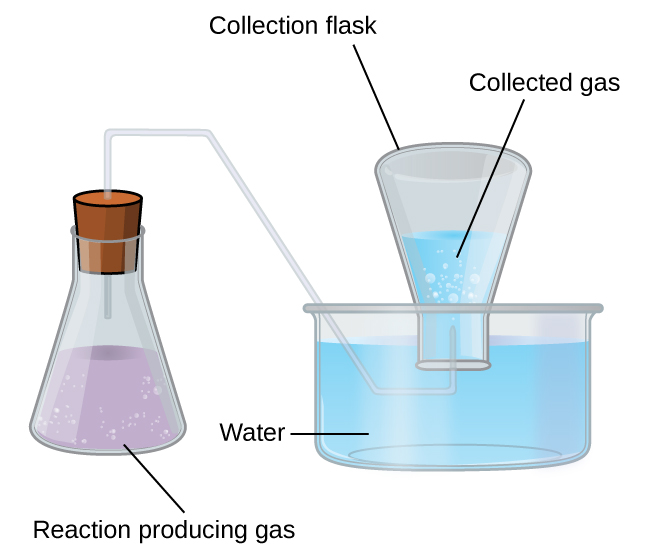 "This figure shows a diagram of equipment used for collecting a gas over water. To the left is an Erlenmeyer flask. It is approximately two thirds full of a lavender colored liquid. Bubbles are evident in the liquid. The label ""Reaction Producing Gas"" appears below the flask. A line segment connects this label to the liquid in the flask. The flask has a stopper in it through which a single glass tube extends from the open region above the liquid in the flask up, through the stopper, to the right, then angles down into a pan that is nearly full of light blue water. This tube again extends right once it is well beneath the water's surface. It then bends up into an inverted flask which is labeled ""Collection Flask."" This collection flask is positioned with its mouth beneath the surface of the light blue water and appears approximately half full. Bubbles are evident in the water in the inverted flask. The open space above the water in the inverted flask is labeled ""collected gas."""