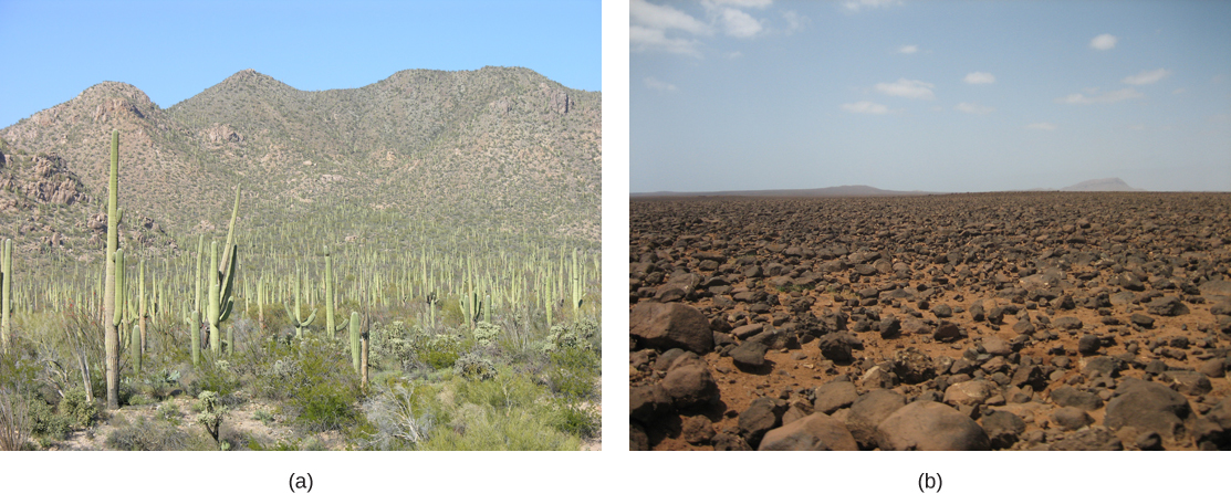 Photo (a) shows saguaro cacti that look like telephone poles with arms extended from them. Photo (b) shows a barren plain of red soil littered with rocks.