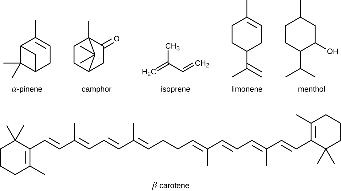 Alpha-pinene is a carbon ring with added carbon projections. Camphor is a carbon ring with added carbon projections and a double bonded oxygen on one carbon. Isophrene is a 4 carbon chain with another carbon attached to carbon 2. Limonene is a carbon ring with a carbon attached to on one end and another carbon attached to the other end; this carbon has 2 carbons attached to it. Menthol i s a carbon ring with a carbon attached to on one end and another carbon attached to the other end; this carbon has 2 carbons attached to it. One more carbon corner has an OH group. Beta-carotene is two carbon rings attached by a long carbon chain.