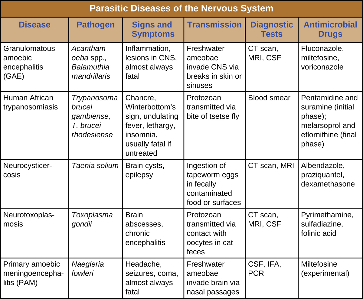 Table titled: Parasitic Diseases of the Nervous System. Columns: Disease; Pathogen; Signs and Symptoms; Transmission; Diagnostic Tests; Antimicrobial Drugs. Disease: Granulomatous amoebic encephalitis (GAE); Acanthamoeba spp., Balamuthia mandrillaris; Inflammation, lesions in CNS, almost always fatal Freshwater ameobae invade CNS via breaks in skin or sinuses; CT scan, MRI, CSF; Fluconazole, miltefosine, voriconazole. Disease: Human African trypanosomiasis; Trypanosoma brucei gambiense, T. brucei rhodesiense; Chancre, Winterbottom's sign, undulating fever, lethargy, insomnia, usually fatal if untreated; Protozoan transmitted via bite of tsetse fly; Blood smear; Pentamidine and suramine (initial phase); melarsoprol and eflornithine (final phase). Disease: Neurocysticercosis; Taenia solium; Brain cysts, epilepsy Ingestion of tapeworm eggs in fecally contaminated food or surfaces; CT scan, MRI; Albendazole, praziquantel, dexamethasone. Disease: Neurotoxoplasmosis; Toxoplasma gondii Brain abscesses, chronic encephalitis; Protozoan transmitted via contact with oocytes in cat feces; CT scan, MRI, CSF; Pyrimethamine, sulfadiazine, folinic acid. Disease: Primary amoebic meningoencephalitis (PAM) Naegleria fowleri; Headache, seizures, coma, almost always fatal; Freshwater ameobae invade brain via nasal passages; CSF, IFA, PCR; Miltefosine (experimental).